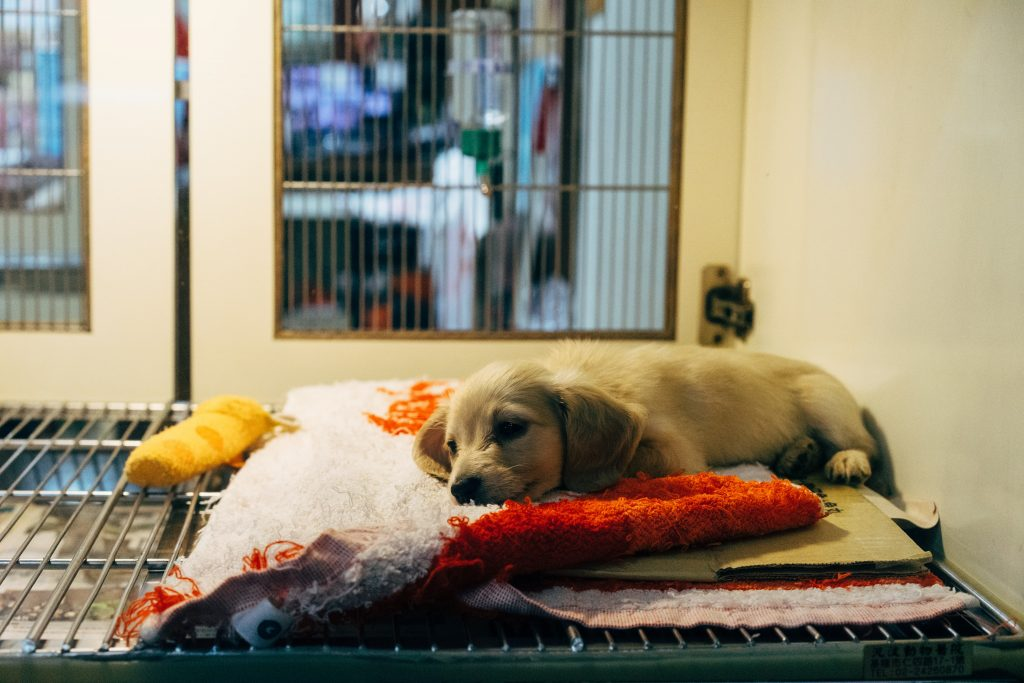 puppy sleepy in cage at vet